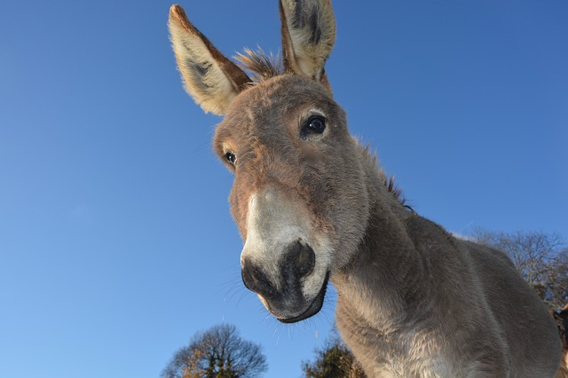 The Donkey Story for Management